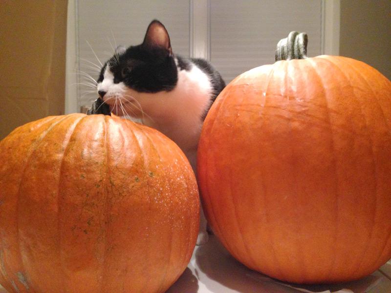 Gourd inspector